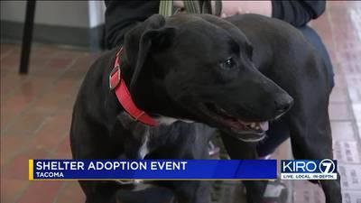 Adoption event highlights Adopt-a-Shelter Dog Month