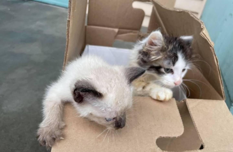 Kittens dumped outside Tacoma shelter