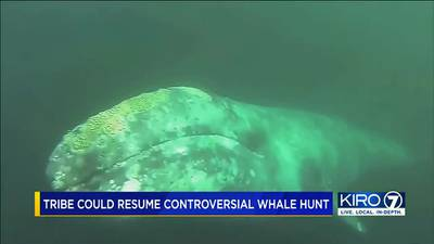 Comment period opens on proposed whale hunt