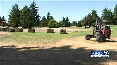 Everett golf course severely damaged after wrong chemicals sprayed on grass