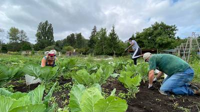 Urban farm Giving Garden donates all veggies, fighting pandemic food insecurity