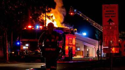 20 to 30 cats likely killed in pet shelter fire, officials say