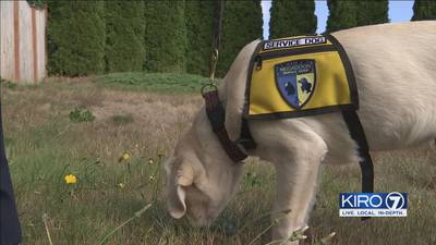 Service dog vests sold at Washington State Fair stirring controversy
