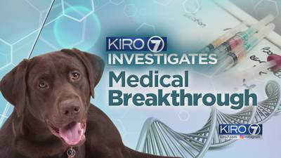 Gene replacement therapy that works in dogs to be tested in children