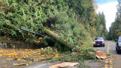 Wind bringing trees and power lines down across the Northwest