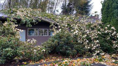 VIDEO: Fall storm downs trees, power lines across Puget Sound