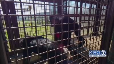 Chimpanzee sanctuary hoping to expand and provide homes for more animals