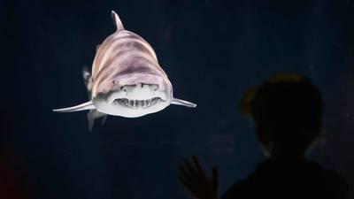 'Super-senior shark' dies at Point Defiance Zoo & Aquarium
