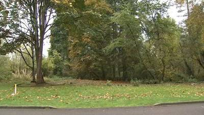 A New Hope for Woodinville's threatened 'Yoda Grove' park