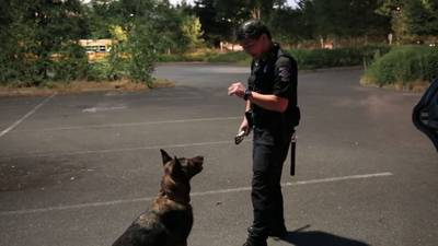 Seattle Police Foundation raising money to buy drug detection dogs for SPD